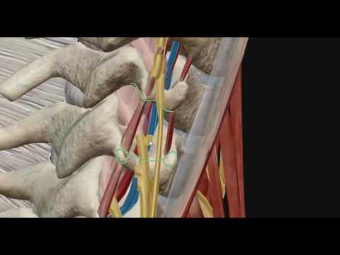 Лечение суставов в санатории ростова на дону