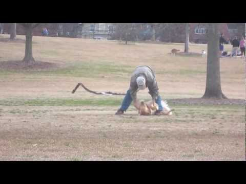 Lazy Dog Doesn T Want To Leave The Park
