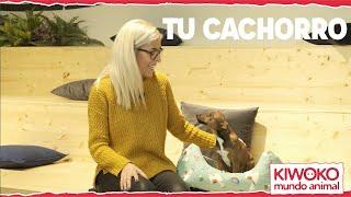 Kiwoko Tu Cachorro ¡Bienvenidos! anuncio