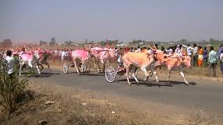 Bullock Cart Race Kudubandi At Nej   March 2019