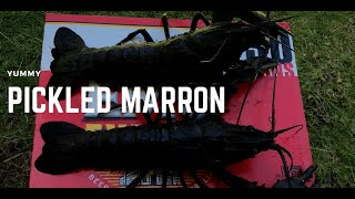 Marron catch and pickle No1 2020