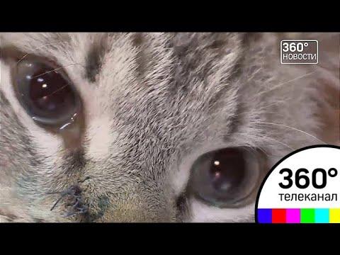 В Дубне в упор расстреляли бездомного котенка