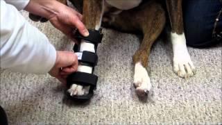 How to put a leg splint on a dog