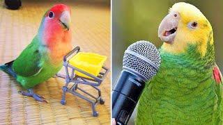 Baby Animals 🔴 Funny Parrots and Cute Birds Compilation (2019) Loros Adorables Recopilación #4