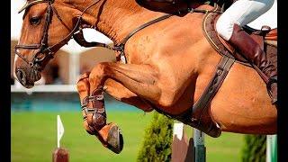 Что такое конкур в конном спорте