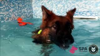 Action : offrez 18 secondes de nage pour Newton en un clic !
