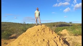 Termites Build Colony Larger Than England