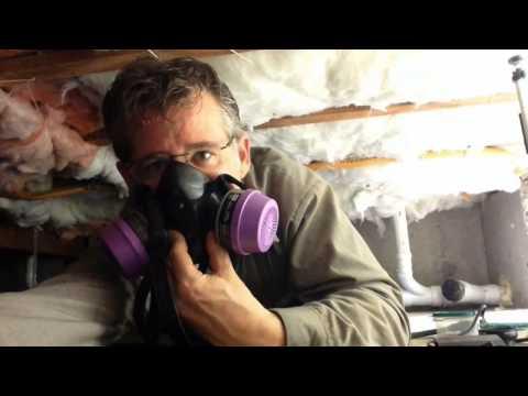 Cascade Pest's Rodent Inspections