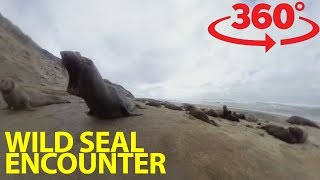 Get face to face with elephant seals in 360