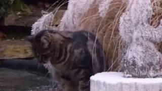 Katze Mimi - in der Weihnachts Winterwelt