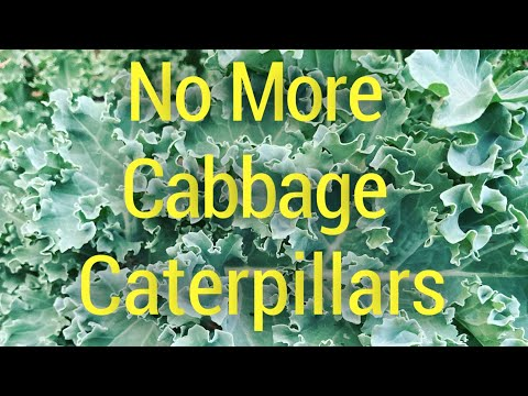 , title : 'Plant That Broccoli Now and Defeat Pests! Cabbage, Kale, Brassica Solutions!