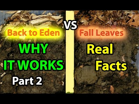 Back to Eden No Till Organic Gardening 101 Method with Mulch VS Leaves Composting Garden Soil  #2