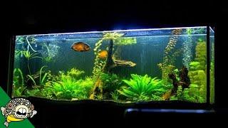 What makes a good aquarium?