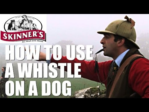 Gundog training tips – how to use the whistle