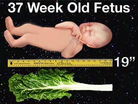 Pregnancy health guru 37 weeks labor