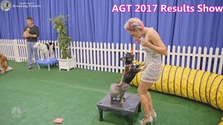 Finals AGT Judges Get into Dog Training with Sara & Hero - America's Got Talent 2017 Finale Results