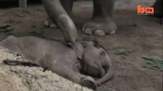 Forsker: Vi fornægter dyrs følelser, så vi fortsat kan behandle dem, som vi vil