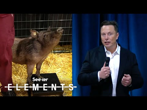 Elon Musk Just Showed Off How Neuralink's Implant Works…in a Pig