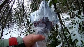 Загадочная находка в лесу. Что это?