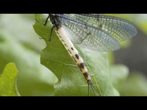 Time is the essence for Mayfly´s