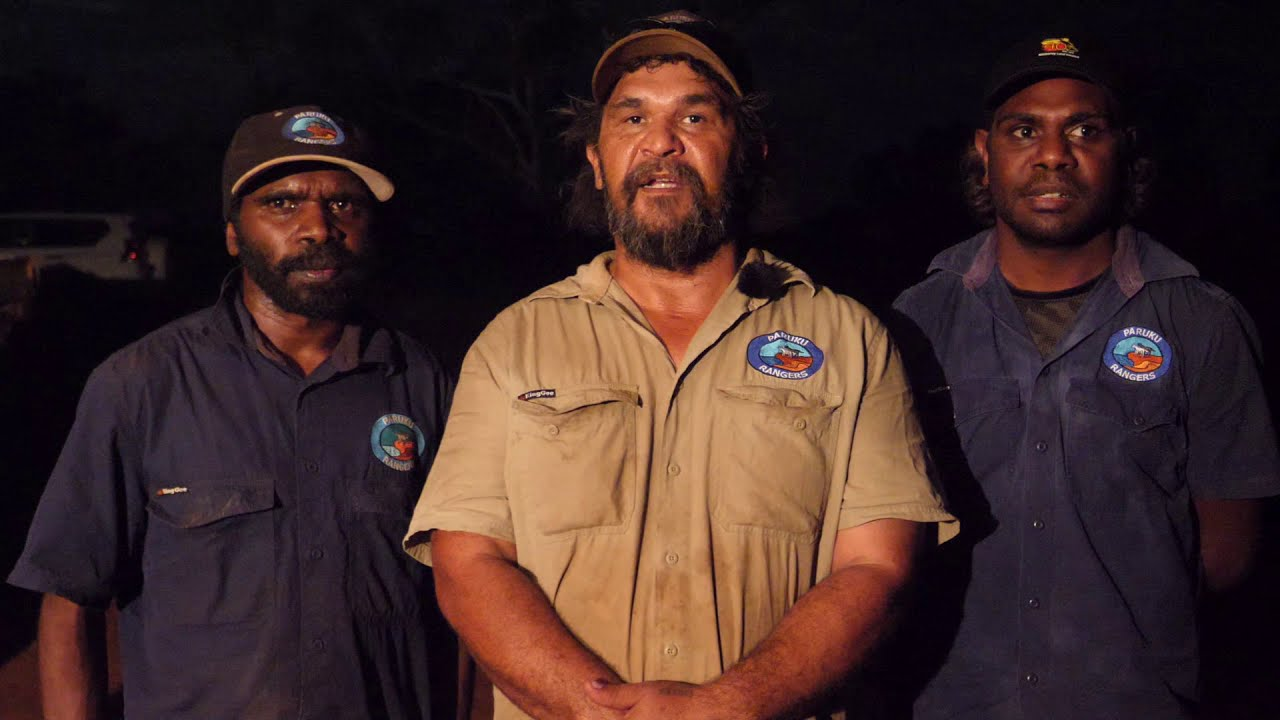 Talking night parrots on Paruku Country