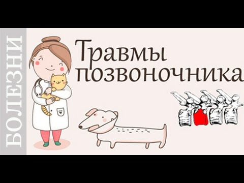 Травмы позвоночника у собак и кошек