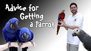 Tips About Getting a First Parrot