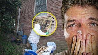 Man Kept Hearing Strange Noises Behind The Bricks, Look What He Found Inside