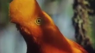 Weird animals of the Andean Cloud Forests - Wild South America - BBC