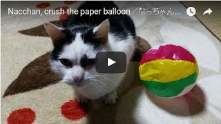 Nacchan, crush the paper balloon/なっちゃん、紙風船を潰す!