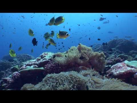 SCHÖNER TAUCHEN Südsee - Tauchexpedition mit der AquaTiki II, Makemo,Taenga,Raroia,Tahaena,Toau und Fakarava,Französisch-Polynesien