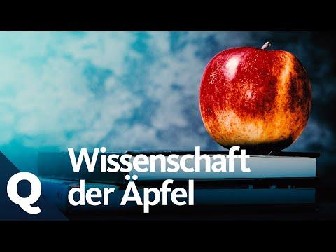 Vše, co jste chtěli vědět o jablkách, ale báli jste se zeptat