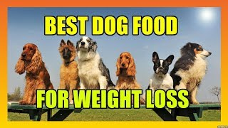 Top & Best Dog Food on Amazon For Weight Loss Including Senior Dogs ~Reviews For Paws~