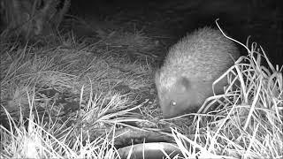 Wildlife Trail Camera - 25.3.2019