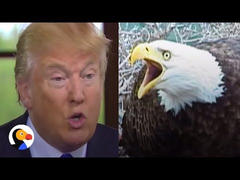 Trump Administration Trying To Gut Endangered Species Act  | The Dodo