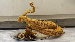 Pharaoh's snake