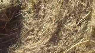 Льняная пакля - 50 м. рулон от компании ЭКО-ДОМ - видео