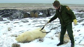 Risk Takers - 114 - Polar Bear Alert Agent
