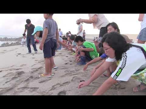 種子島の学校活動:西野小学校前之浜海岸でウミガメ放流体験2019年