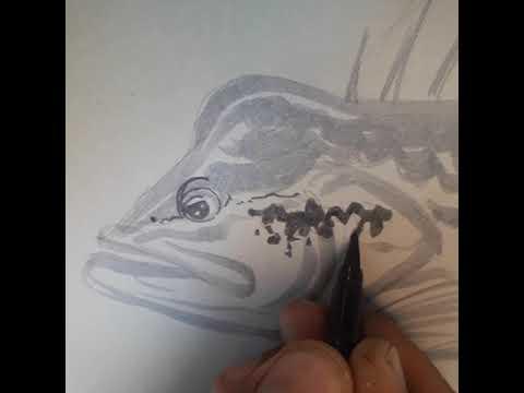 PEACOCKBASS ART