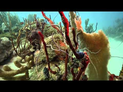 Reef Diving in the Dominican Republic