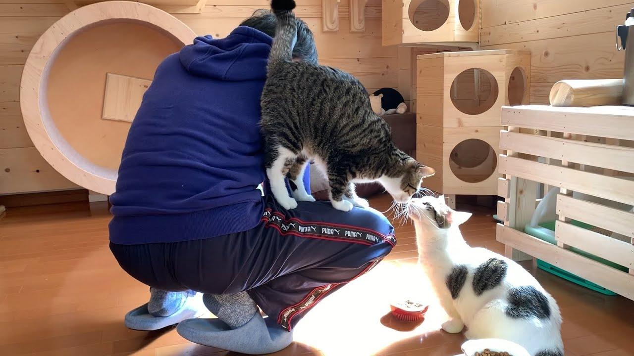 お父さんに乗った後は・・・な猫