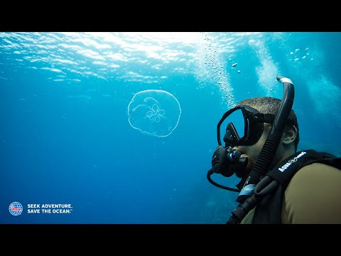 How to Get Scuba Certified - YouTube