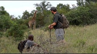 SafariLive March 13-  Giraffe on bushwalk!