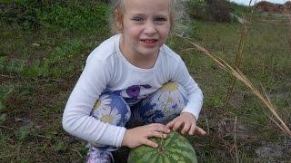 ВЛОГ собираем дикие арбузы во Флориде США VLOG