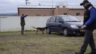 Seminario de perros detectores de sustancias olorosas