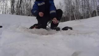 Черви на зимнюю рыбалку
