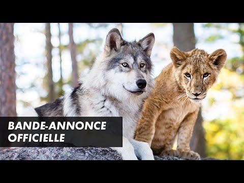Le Loup et le lion - bande-annonce StudioCanal