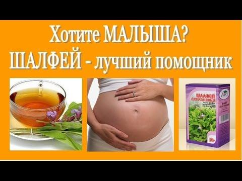 Не получается ЗАБЕРЕМЕНЕТЬ?  ШАЛФЕЙ - лучший помощник! Salvia (sage) - for pregnancy