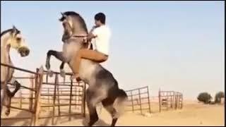 اغاني طرب MP3 عصبية الخيل العربي الاصيل تحميل MP3